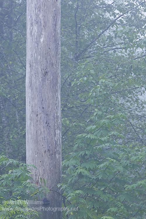 Tree Trunk, British Columbia - Canada