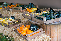 Kilduff Farm, East Lothian, Scotland, United Kingdom, 17 October 2019. Pumpkin Patch: The pick your own pumpkin patch gears up for its opening tomorrow. In its second year, Lucy and Russell Calder and their children make final preparations for visitors. The patch is open this weekend and next, selling a variety of Halloween carving pumpkins and culinary pumpkins.  Pictured: A variety of culinary pumpkins.<br /> Sally Anderson | EdinburghElitemedia.co.uk