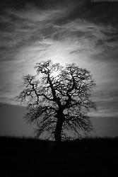 Tree and clouds, Rothley, Leicestershire, England.<br /> Photo: Ed Maynard<br /> 07976 239803<br /> www.edmaynard.com