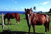Horses, Hana Hotel, Hana Coast, Maui, Hawaii (no property release)<br />