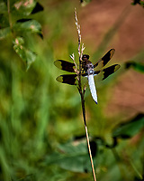 Dragonfly. Image taken with a Fuji X-T1 camera and 100-400 mm OIS lens.