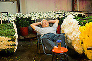 Flower seller asleep at the Wansheng Market in Shanghai, China