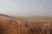 Ancient open prairie on a frosty morning near Minot, North Dakota, United States. Reed beds and grasses cover much of the area. This sparse landscape is flat with only slightly elevated areas. Although not dramatic the land is wild and beautiful.