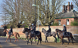 Horses head out to the gallops at Newmarket Racecourse.