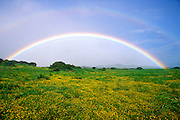 Double rainbow over wildflowers in the Kohala Mountains, The Big Island, Hawaii