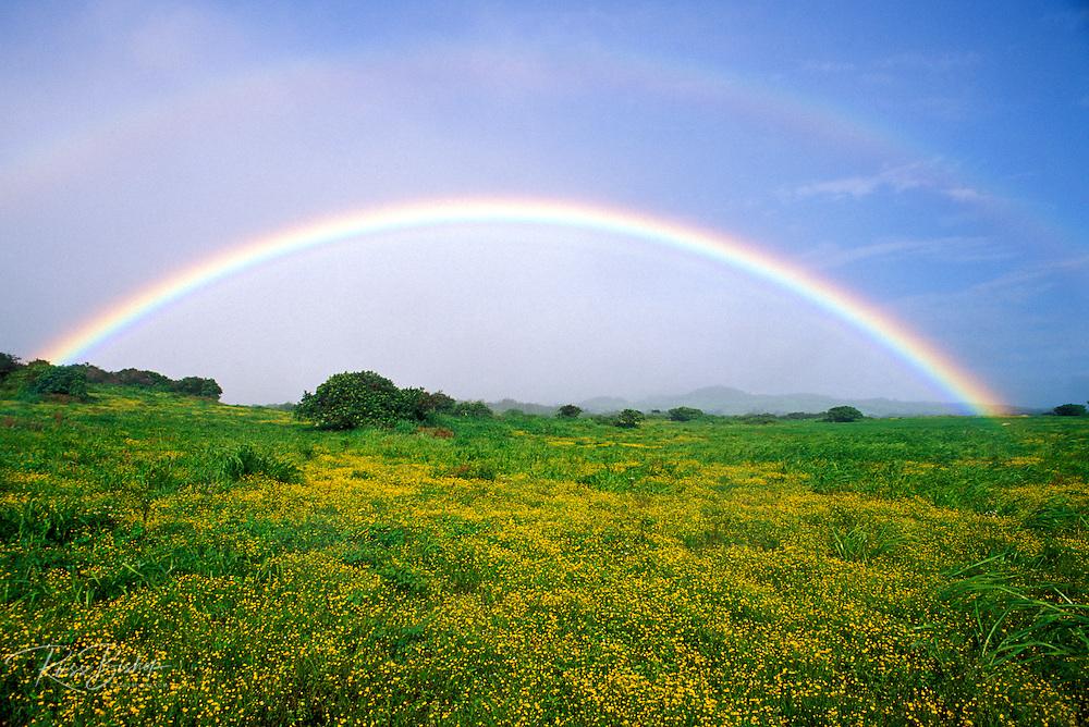 Double rainbow over wildflowers in the Kohala Mountains, The Big Island, Hawaii