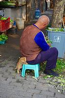 Chine, Shanghai, chaton dans le quartier de Xintiandi, ancienne concession francaise //  China, Shanghai, cat in Xintiandi neighbourhood, French Concession