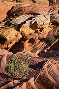 Valley of Fire State Park, about an hour from Las Vegas, Nevada.