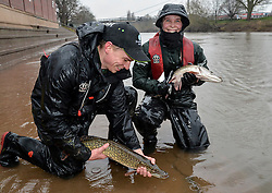 © London News Pictures. 28/02/2014. Worcester, UK.   Members of the Environment Agency holding two large  fish rescued after being trapped on Worcester racecourse when flood waters subsided. Fish, including roach, perch, bream and pike, some weighing over 10lbs, were caught using a large hand net. Photo credit: LNP