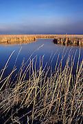 Wetlands in winter, Lower Klamath Basin National Wildlife Refuge.