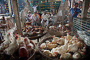 Caged chickens on sale at the Sonargaon market in the town of Sonargaon outside Dhaka, Bangladesh.