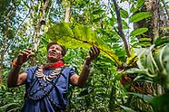 Exploring Yasuni National Park in the Amazon basin of Ecuador