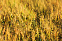 Farmland in the Palouse region of rural Washington State<br /> <br /> ©2016, Sean Phillips<br /> http://www.RiverwoodPhotography.com
