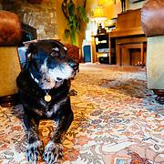 Bo - Martha Hunt and Jim Finneran's family dog.