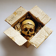 I found professor Cope in a box last used by Herbach and Rademan for electrical parts and his skull wrapped in the want ads of the Philadelphia Enquirer.