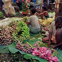 Asia, India, Calcutta. Lotus vendor in the flower market in Calcutta.