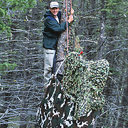 Daniel J. Cox constructing a blind in a tree to view a Great Gray Owl nest during spring in Montana.