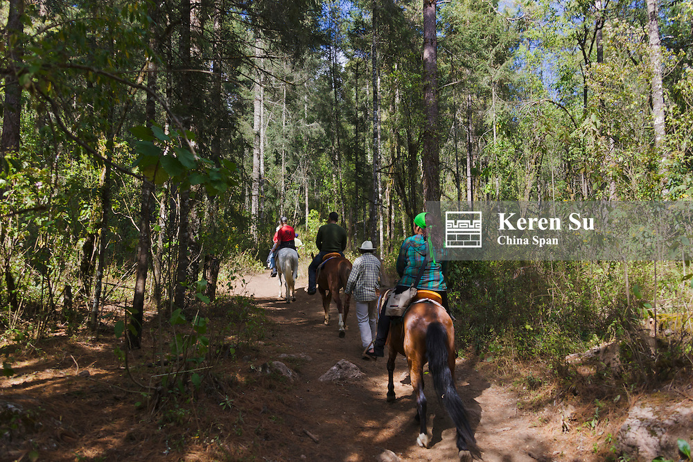 Tourists riding on horse back in the forest, Michoacan, Mexico