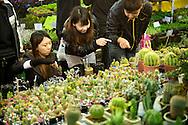 Women design their own cactus arrangement at the Taipei Flower Market.