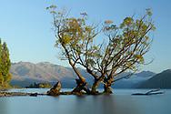 Oceania; New Zealand; Aotearoa; South Island; Otago, Wanaka. lakefront