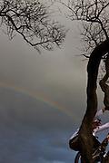 mountain bike,photo,trial, red bull,Hawaii,sports,image,photogaphy