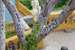 Writing In Bark, Phnom Sampeau Pagoda