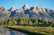 Moose cow and calf, Shwabackers Landing, Grand Teton National Park, Jackson Hole, Wyoming