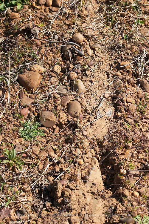 albarin sandy gravelly soil Bodegas Margon , DO Tierra de Leon , Pajares de los Oteros spain castile and leon