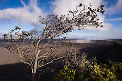 The Halemaumau Crater, a pit crater in the larger Kilauea Caldera in Hawaii Volcanoes National Park on the Big Island of Hawaii is framed by a Ohia-lehua (Metrosideros polymorpha) tree. The 3,000 foot wide and 300 foot deep crater is dwarfed by the much larger roughly two by three mile wide caldera that it is in. The Ohia-lehua is one of the most common trees in the park. It can reach heights of 60 to 80 feet in wet forests, but can be only a small shrub on dry lava fields. The photo is taken from the Jaggar Museum located along Crater Rim Drive.