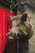 A boar head outside a souvenir shop in Siena, Tuscany, Italy