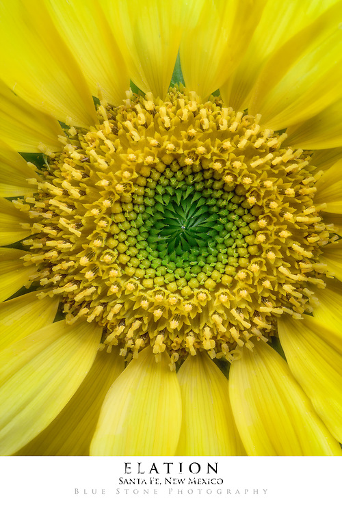 20x30 poster print of a sunflower and water drop.