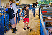 16 JULY 2020 - BOONE, IOWA: A boy sweeps up sawdust in the pig barn on the first day of the Boone County Fair in Boone. Summer is county fair season in Iowa. Most of Iowa's 99 counties host their county fairs before the Iowa State Fair. In 2020, because of the COVID-19 (Coronavirus) pandemic, many county fairs were cancelled, and most of the other county fairs were scaled back to concentrate on 4H livestock judging. Boone county scaled back its fair this year. The Iowa State Fair was cancelled completely. Boone County Emergency Management did not approve going ahead with the fair, and has advised anyone who goes to the fair to take precautions and monitor themselves for symptoms of the Coronavirus.            PHOTO BY JACK KURTZ