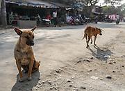 Stray dogs roam a street in Mandalay, Myanmar.