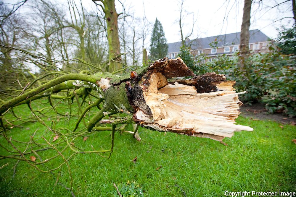 opgevallen bomen door hevige storm/rukwinden-berlaar-jdw