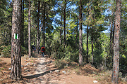 Hiking in the Hanita Forest, Western Galilee, Israel