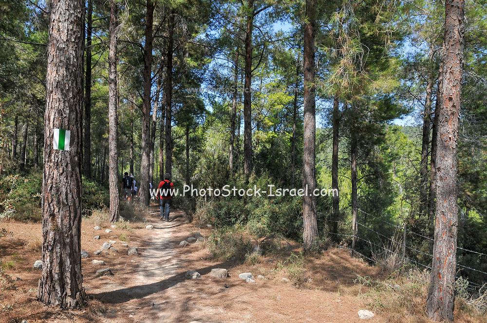 Hiking in the Hanita Forest, Western Galilee, Israel