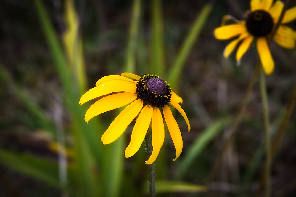One can find these beauties everywhere in the springtime in the Big Cypress National Preserve!