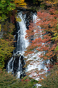 """Fall foliage colors at Kirifuri Waterfall (Kirifuri no taki, """"falling mist""""), an impressive, 75 meter high, two-tiered waterfall below the Kirifuri Highlands, a few kilometers northeast of the temples and shrines of Nikko, Tochigi Prefecture, Japan. Foliage colors turn red, orange and gold in autumn, best around late October to early November. Walk 10 minutes to the observation deck from the parking lot and bus stop, near two restaurants and public toilets."""