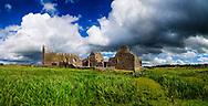 Photographer: Chris Hill, Abbeyknockmoy, Galway