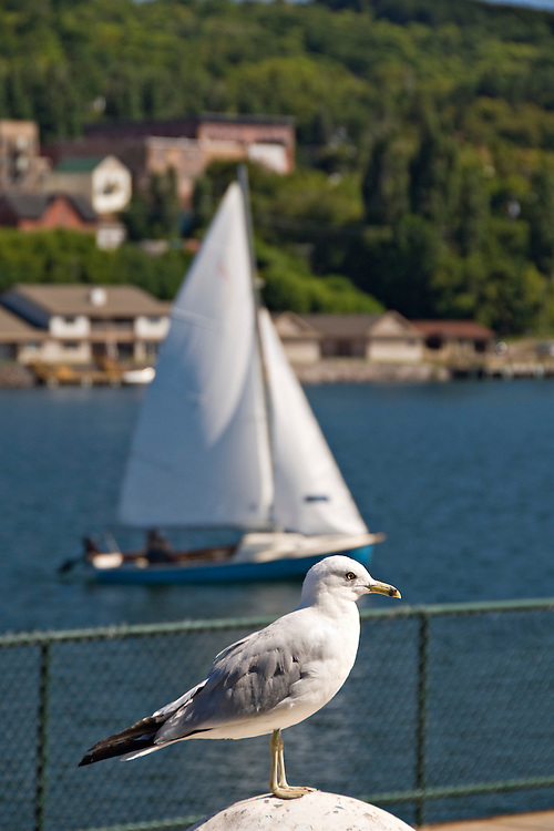 A gull and sailboat on the Portage Canal in Houghton Michigan.