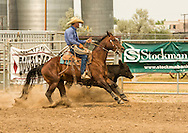 Will James Roundup, Ranch Rodeo, Working Ranch Horse, Hardin, Montana