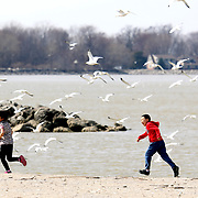 Friends Fannie Shi, 7, left, and Rain He, 7, both visiting from China, cause gulls to swarm in the air as they run along the Lake Erie shore at Maumee Bay State Park in Oregon, Ohio, on Thursday, March 28, 2019. THE BLADE/KURT STEISS