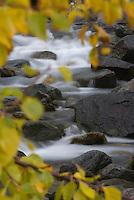 Cascading river through autumnal foliage, Sarek National Park, Laponia World Heritage Site, Sweden