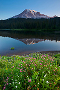 Mount Rainier, the tallest volcano in Washington state, is reflected on the still water of one of the Reflection Lakes, lined by summer wildflowers, in Mount Rainier National Park.