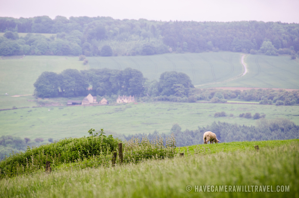 Some of the English countryside in the Cotswolds in Gloucestershire near Winchcombe, with a sheep grazing in the foreground and a farm house in the background.