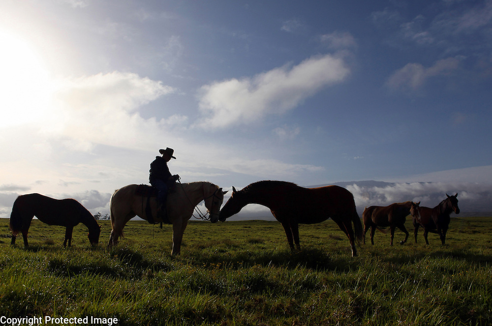 """Jamie Dowsett, 85, who spent most of his life on horses and has rich stories to tell, is photographed riding one of his horses near his home in Waimea, Hi.  """"I'm 85 years old and I still think that cows and horses are the best things that ever walked on earth.  I would give anything if I could still be a cowboy...being out there on the land where nobody bothers you, out in the open where it's quiet...the horses are giving you a wonderful ride in the beautiful countryside...that is a feeling not many people have the opportunity to experience,"""" says Dowsett wistfully."""