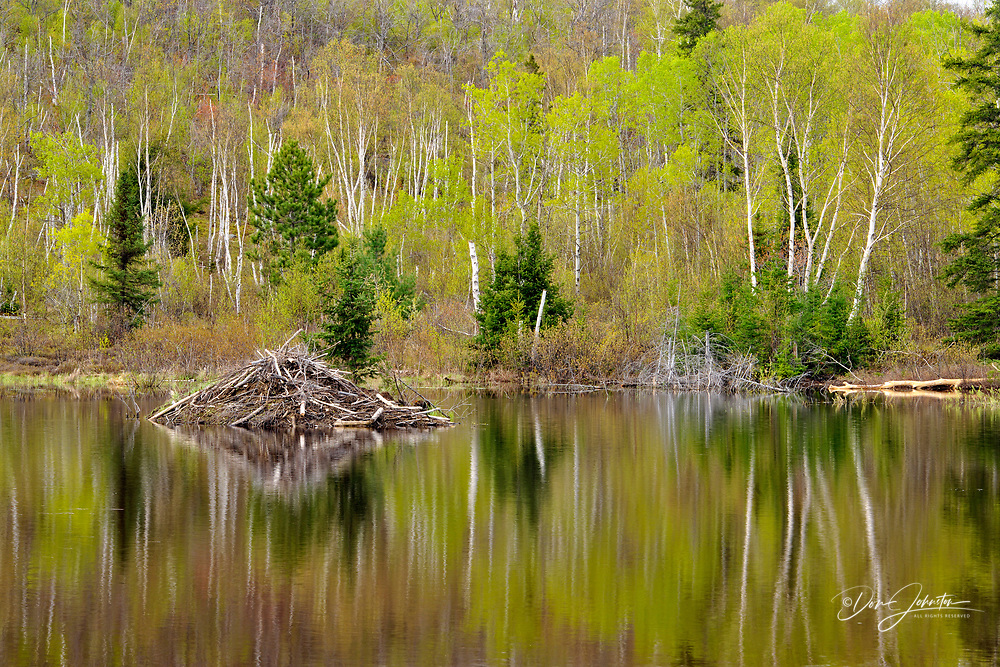 Spring foliage reflected in a beaver pond, Greater Sudbury , Ontario, Canada