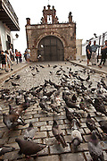 Pigeons on the Calle del Cristo in Old San Juan, Puerto Rico.