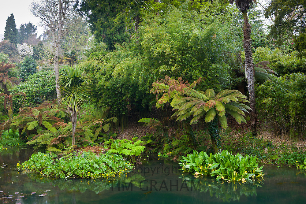 The Tropical garden with exotic foliage at the Lost Gardens of Heligan tourist attraction, Cornwall, England, UK