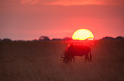 A quickly setting African sun